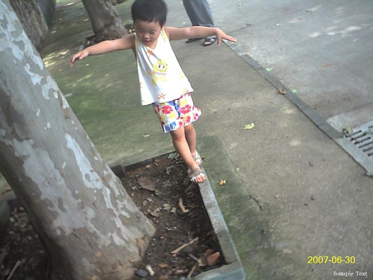 聪儿走在树围的窄砖上。