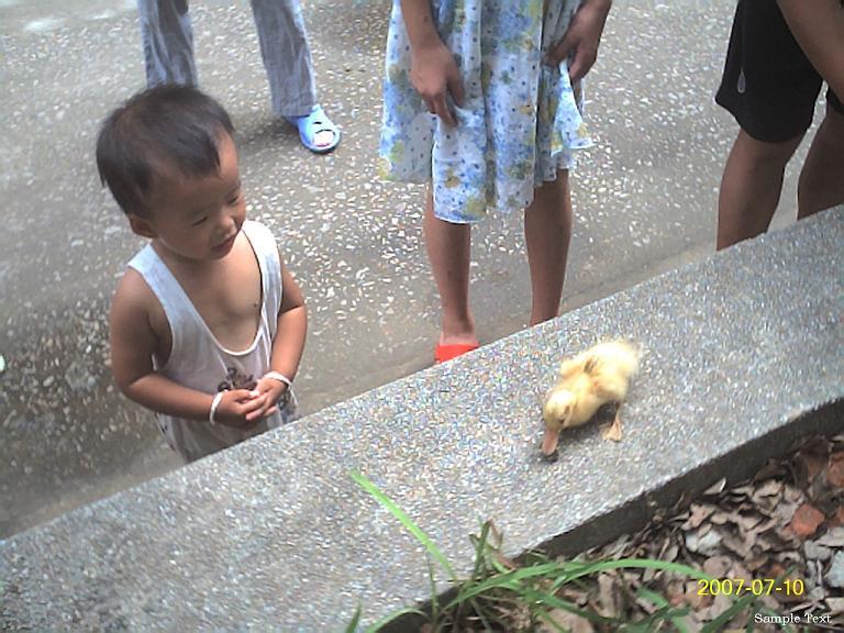 贝儿发现了一只'真正'的鸭。