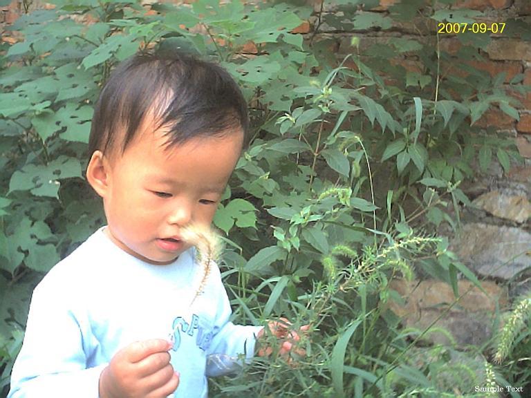 贝儿摘下了一支成熟的'狗尾巴'草。