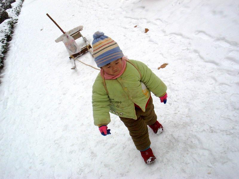 贝儿拉着雪撬前行。