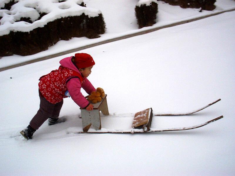 聪儿推着雪撬满地的跑。