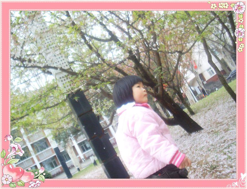 花落的樱花
