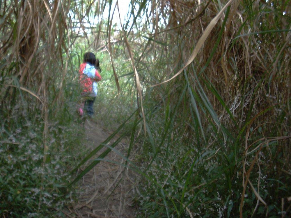 穿过芦苇丛...