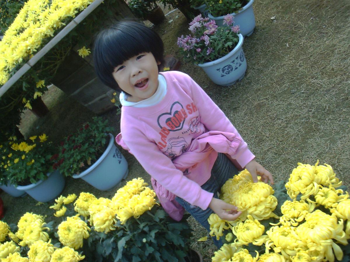 这菊花有多少花瓣呀?