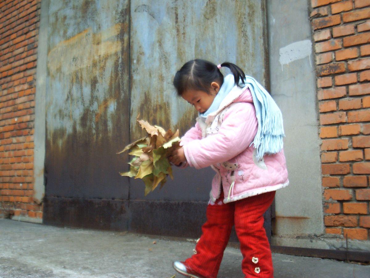 聪儿和贝儿都喜欢树叶