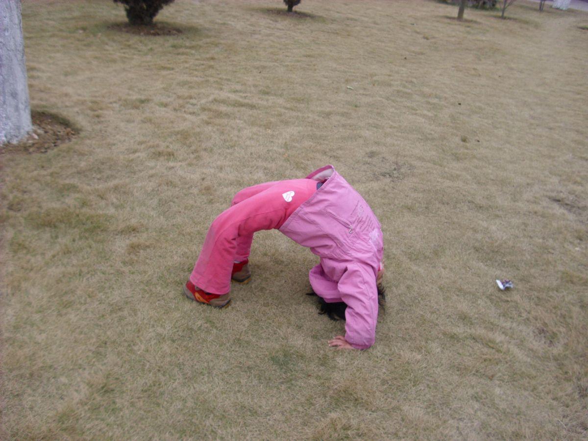 聪儿在草地上翻滚