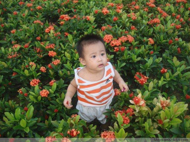 凤凰山照的鲜花