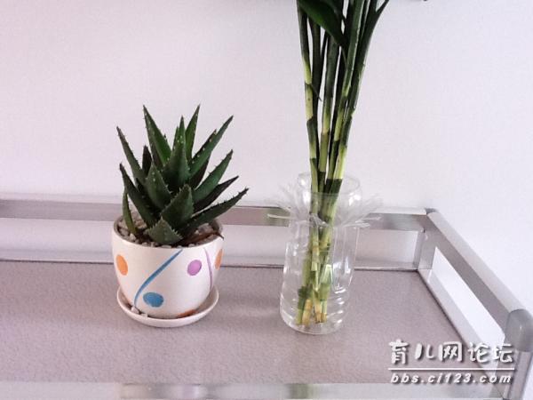 【优妈手工】用塑料瓶做的花瓶!