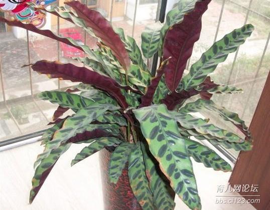 奇特的植物图片